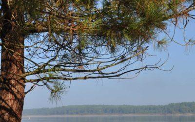Le lac de Sanguinet